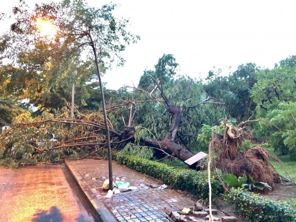 木が倒れた